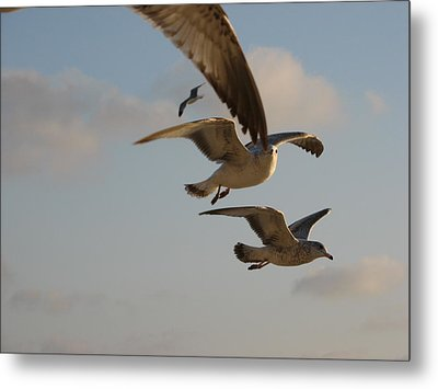 Metal Print featuring the photograph Under His Wings by Jan Cipolla