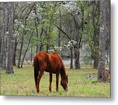 Metal Print featuring the photograph Under The Dogwoods by Margaret Palmer