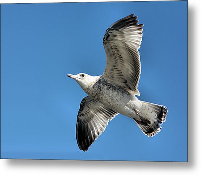 Up Up And Away Metal Print by Kristin Elmquist