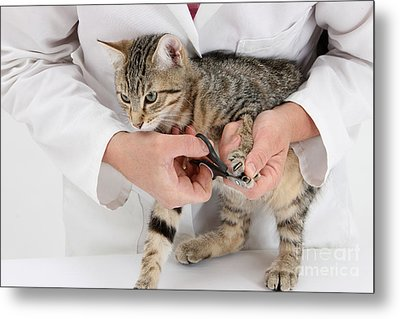 Vet Clipping Kittens Claws Metal Print by Mark Taylor