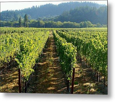Vineyard At Harvest Metal Print by Kathleen Fitzpatrick