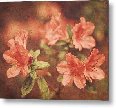 Metal Print featuring the photograph Vintage Pink Azaleas by Mary Hershberger