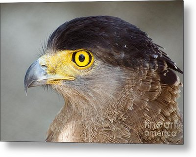 Metal Print featuring the photograph Waiting For Prey  by Fotosas Photography