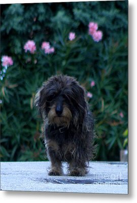 Metal Print featuring the photograph Waiting by Lainie Wrightson