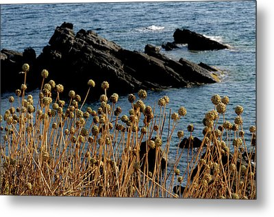 Metal Print featuring the photograph Watching The Sea 1 by Pedro Cardona