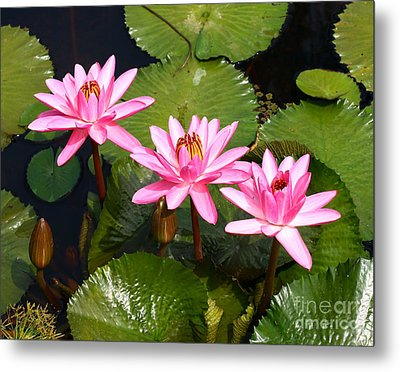 Metal Print featuring the photograph Water Lilies. by Denise Pohl