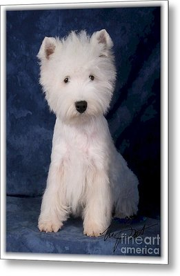 West Highland White Terrier Pup Metal Print by Maxine Bochnia