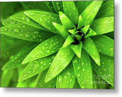 Wet Foliage Metal Print by Carlos Caetano