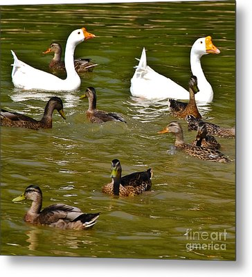 White Geese And Ducks Metal Print by Harry Strharsky