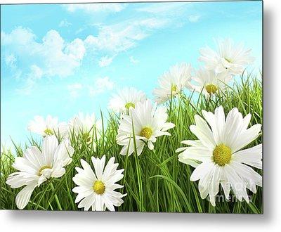 White Summer Daisies In Tall Grass Metal Print by Sandra Cunningham