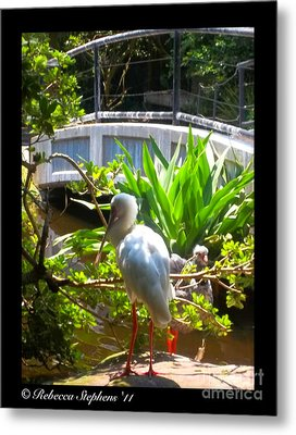 White Zen Metal Print by Rebecca Stephens