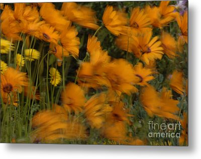 Who Has Seen The Wind Metal Print by Bob Christopher