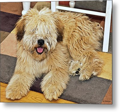Who Needs A Haircut Metal Print by Edward Peterson
