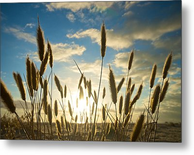Wild Wheat Growing On The Shores Metal Print by Brooke Whatnall