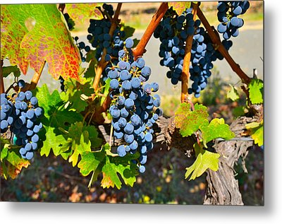 Wine Country Metal Print by Gloria Wannow