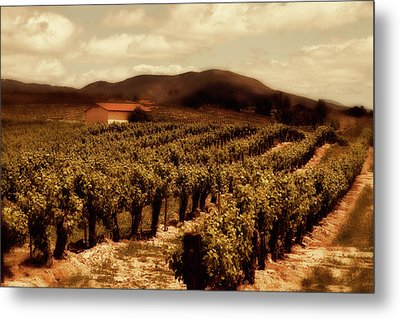 Wine Country Metal Print by Peter Tellone