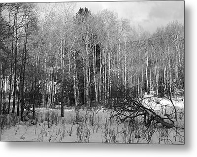 Winter Cold Metal Print by Paul Marto
