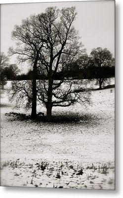 Metal Print featuring the photograph Winter Oaks by John Colley