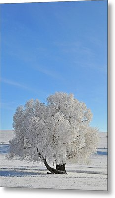 Winter's Coat In Montana's Gallatin Valley Metal Print by Bruce Gourley
