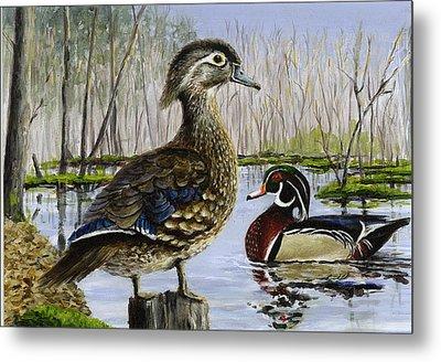Wood Duck Metal Print by Paul Gardner