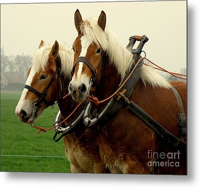 Work Horses Metal Print by Lainie Wrightson