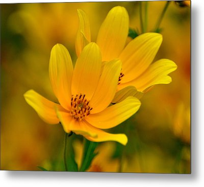 Metal Print featuring the photograph Yellow Blaze by Marty Koch