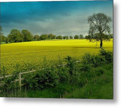 Yellow Field Metal Print by Debra Collins