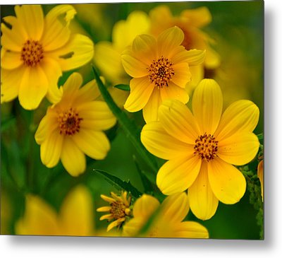 Metal Print featuring the photograph Yellow Flowers by Marty Koch