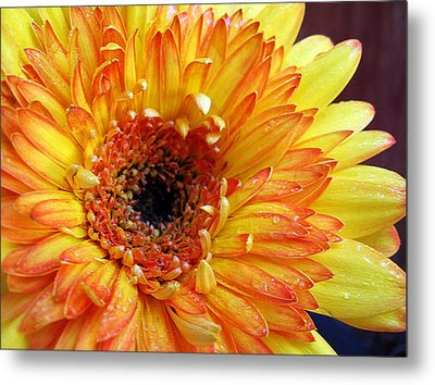 Yellow Gerber Metal Print