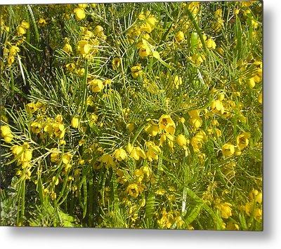 Yellow Mesquite Metal Print