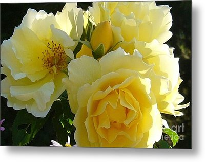 Metal Print featuring the photograph Yellow Rose by Jim Sauchyn