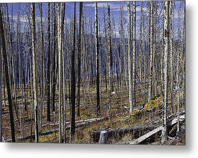 Yellowstone Lake Colors Metal Print