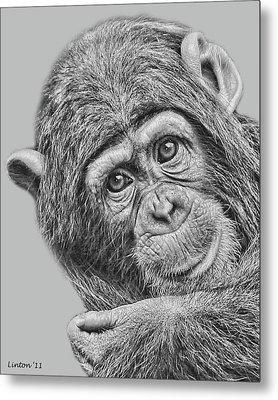Young Chimp 5 Metal Print