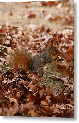 Metal Print featuring the photograph Yummy Snack by Julie Clements