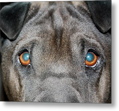 Gandalfs Eyes Metal Print