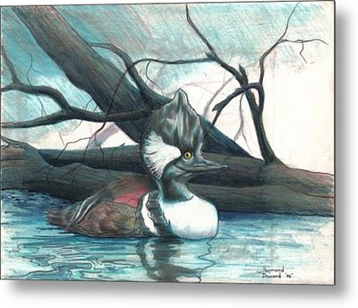 Merganser Duck Metal Print by Raymond Doward