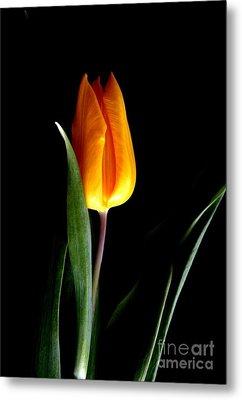 Tulip Fire Metal Print by Valia Bradshaw
