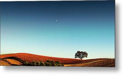 Vineyard Sky Panorama Metal Print by Larry Gerbrandt