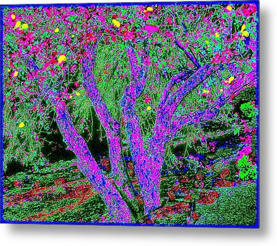 007h  Abstract Arcadia Tree Metal Print by Ed Immar
