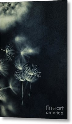 Whispers In The Dark 2 Metal Print by Priska Wettstein