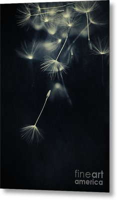 Whispers In The Dark Metal Print by Priska Wettstein