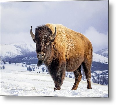 American Legend Metal Print by Jack Bell