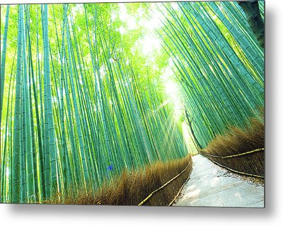 Bamboo Grove Forest Light Rays Trees Tilted Metal Print