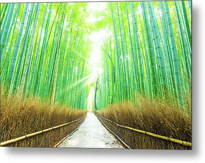 Bamboo Tree Forest Beams God Rays Straight Path H Metal Print