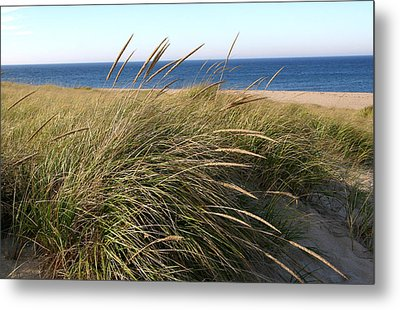 Beach Grass At Truro Metal Print by Frank Russell