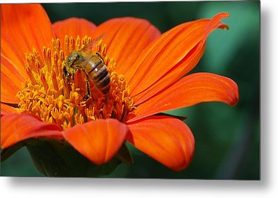 Metal Print featuring the photograph Bee-utiful by Debbie Karnes