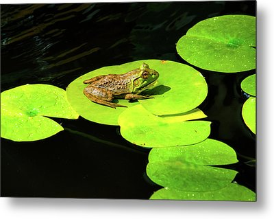 Metal Print featuring the photograph Blending In by Greg Fortier
