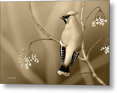 Metal Print featuring the digital art Bohemian Waxwing In Sepia by John Wills
