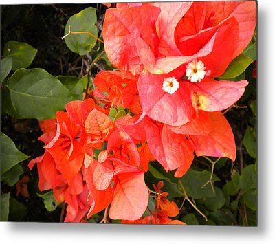 Bouganvilla 1 Metal Print by Renate Nadi Wesley