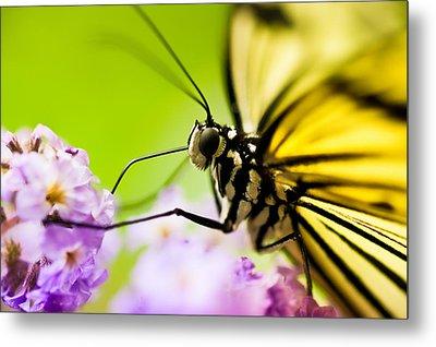 Butterfly Metal Print by Sebastian Musial